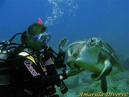 Diving with Turtles in Tenerife
