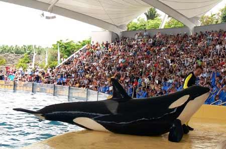 Orca Tenerife
