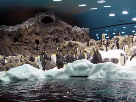 penguins tenerife